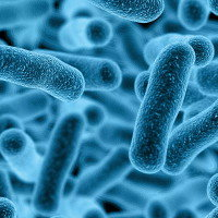 How Probiotics Promote a Healthy Gut Microbiome